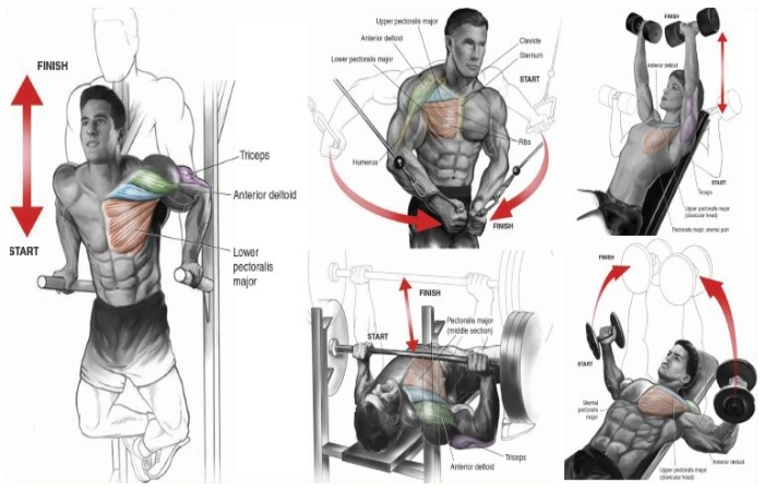 Upper chest Routine