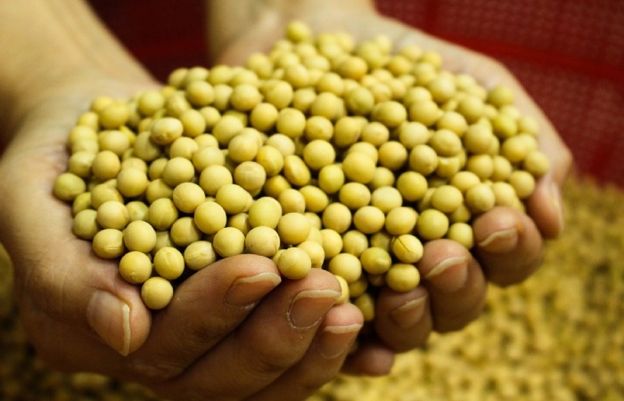 Isoflavone-rich foods such as soybean Diet to Have Perfect Skin